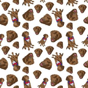 Bailey the brown labrador pattern