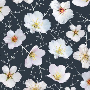 Almond bloom on grey