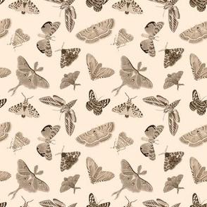 Moths - neutral - small