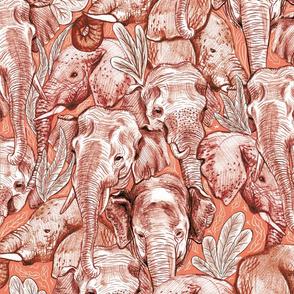 Elephant Hug Coral