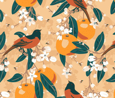 Orchard orioles in the orange grove.