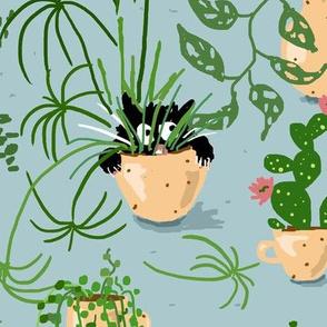 I was normal 10 plants ago