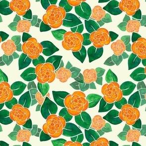 Picotee Begonias