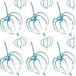 Turquoise_physalis-ch