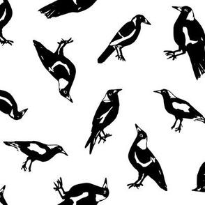 Magpies!