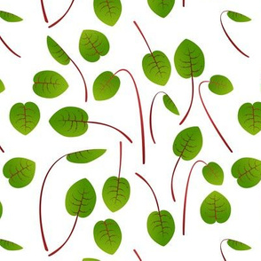 Microgreen Sorrel