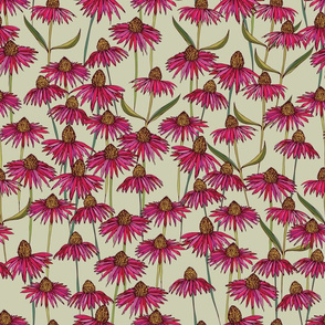 Echinacea on Linen colour background