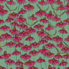 Echinacea on mint green background