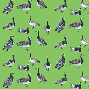Barnacle Geese [grass green]