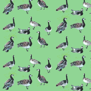 Barnacle Geese [mint green]