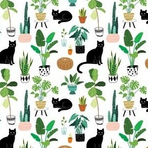 black cats with house plants