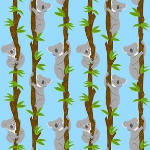 Koalas in Trees