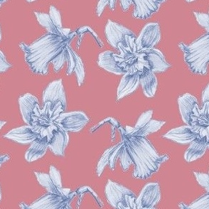 Daffodil sketches on Pink