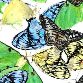 Butterflies Large