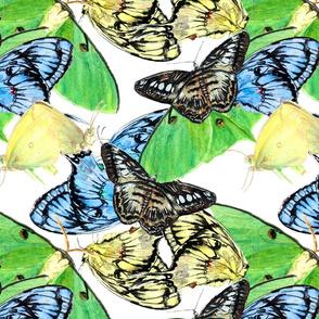 Butterflies Smaller