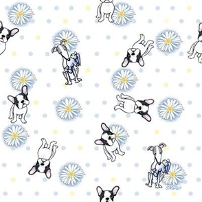 Frenchies & Italian Greyhounds On Daisies