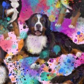 Bernese mountain dog repeat