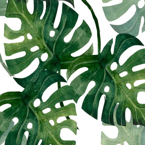 Monstera White 20x20