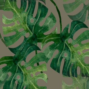 Monstera Medium 20x20