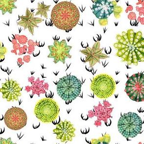 Cactus Tops