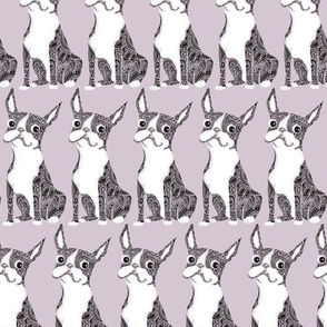 Boston Terrier Lavendar