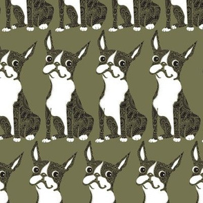 Boston Terrier Olive Green
