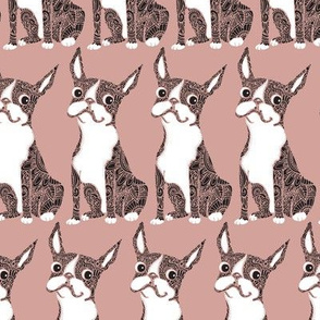 Boston Terrier Rose