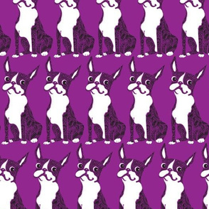 Boston Terrier  Purple