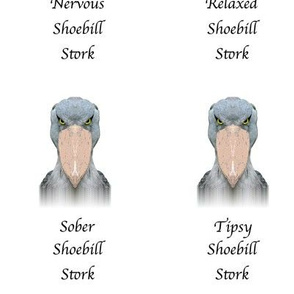 The Many Expressions of a Shoebill Stork
