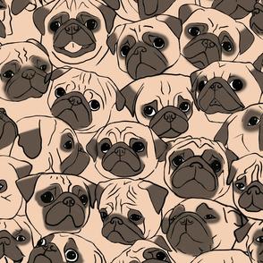 Fawn Pugs
