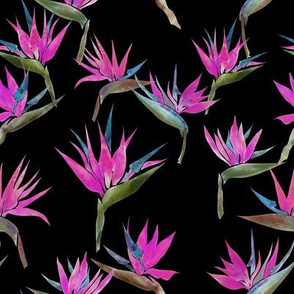 Pianted Bird Fuchsia-Black