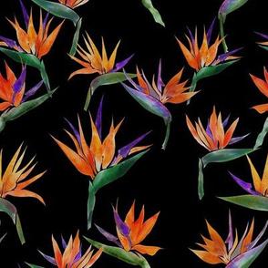 Pianted Bird Orange-Black