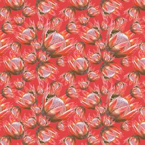 Protea fantasy_Coral