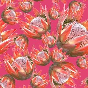 Protea fantasy_Passion Pink