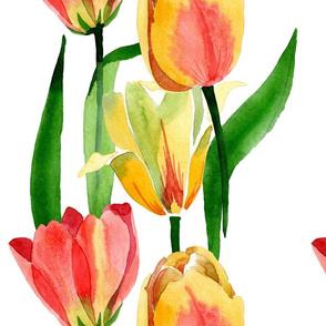 Tulip Fresh