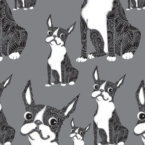 Boston Terriers Gray