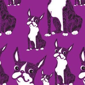 Boston Terriers Purple