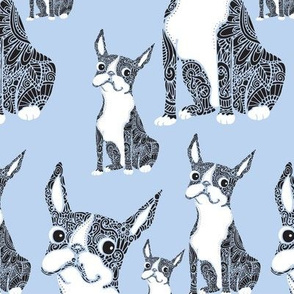 Boston Terriers Periwinkle