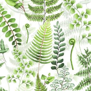 "9"" Woodland green forest botanical - fern leaves on white"