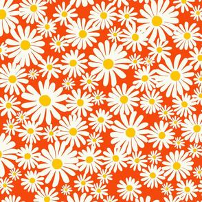 Daisies on Red-Orange