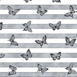 Small Grey Butterflies on Grey Stripes