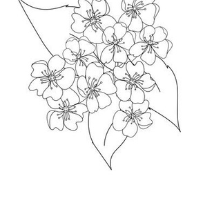 Pear-Blossom-Collection_BW