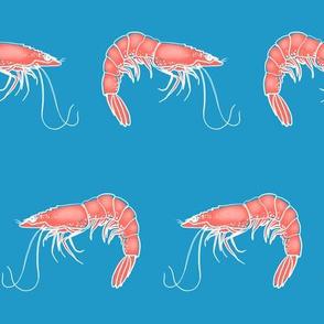 jumbo shrimp on teal blue