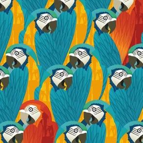 A pandemonium of parrots-Turquoise