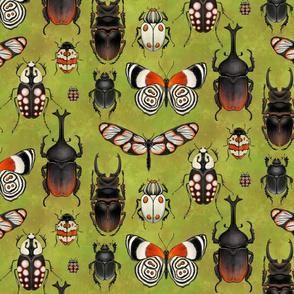 Bugs and beetles