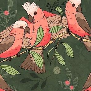 Flock of Galahs_green