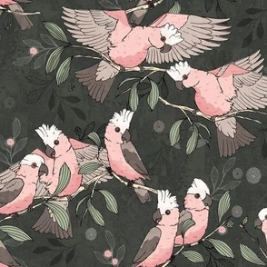 Flock of Galahs_pinkandgrey