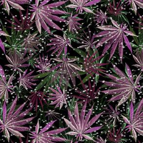 Green Magenta 420 Sprinkle