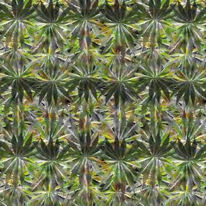 Cannabis Leaf March