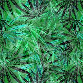 Lacy Leaf Green Ganja